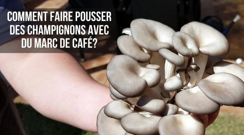 Comment Faire Pousser des Champignons Avec du Marc de Café