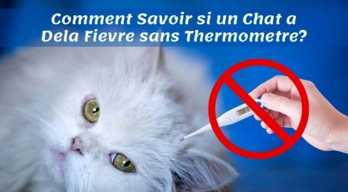 Comment Savoir si un Chat a Dela Fievre sans Thermometre
