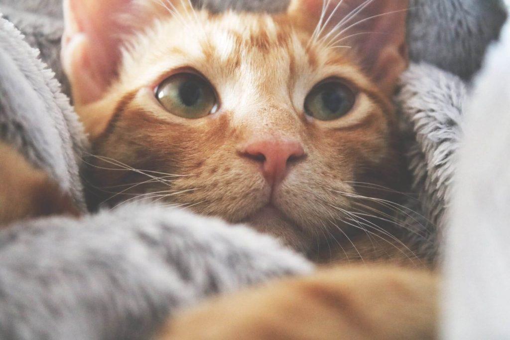 vérifier le nez du chat